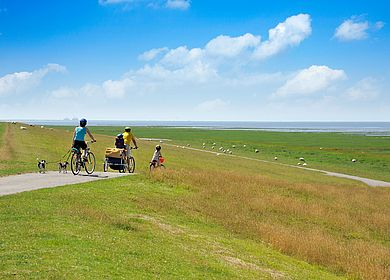 Radeln auf dem platten Land in Dithmarschen