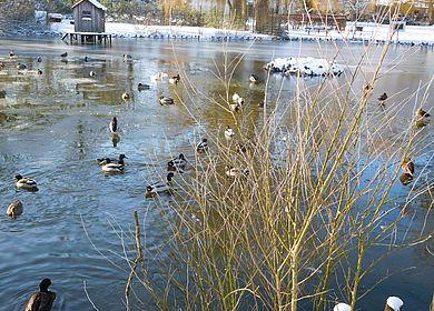 Hintz-Park in Marne im Winter