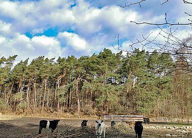 Am Gudendorfer Forst