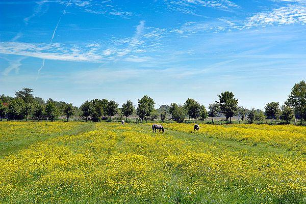 Reiturlaub ist beliebt im Nordseeland Dithmarschen