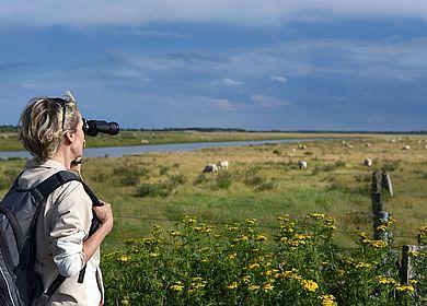 Flachlandwandern in Dithmarschen