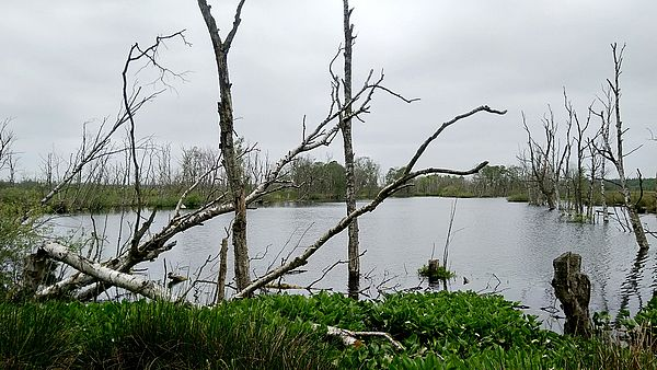Offenbütteler Moor